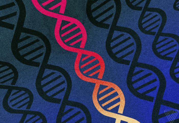 科学家重新命名人类基因 什么是人类基因