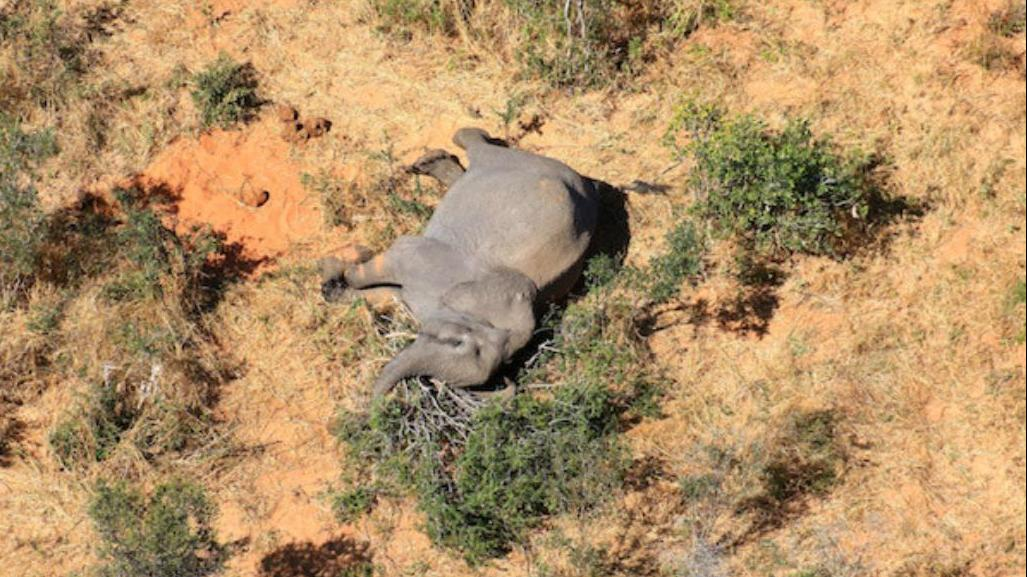 博茨瓦纳大象神秘死亡事件 官方公布初步调查结果