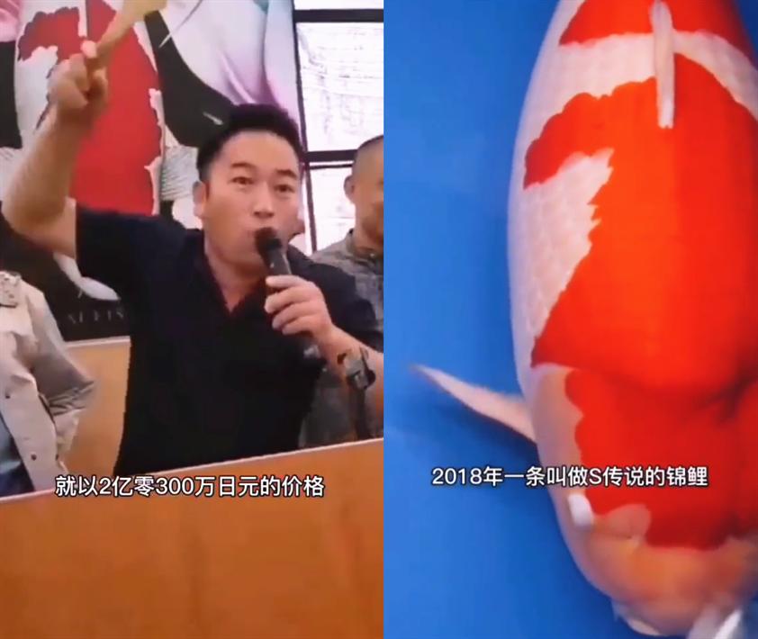 2015年中国福利彩票8月2号双色球开奖是多少号 双色球2013057