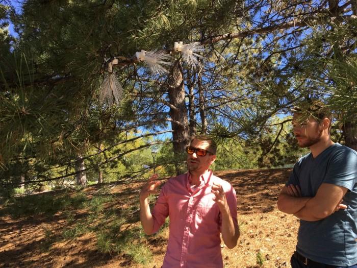 科学家利用树叶上磁性颗粒的堆积来衡量周围空气质量
