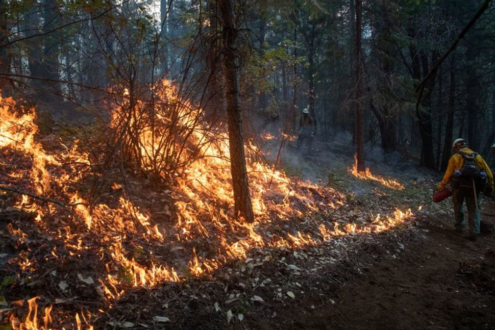 美国西海岸大火形势危急 参议员称堪比二战景象