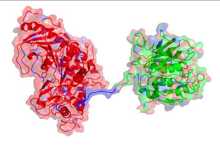 """科学家发现""""超级酶"""" 让消化PET塑料垃圾速度提高6倍"""