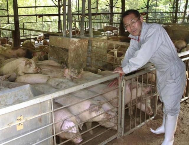 【资料图:日本养猪场】