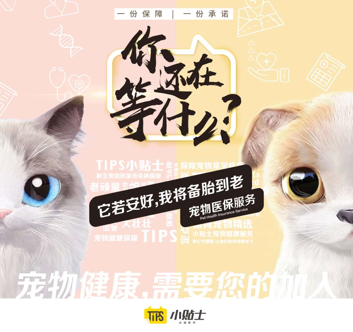 af82 iypetiv9789618 - Hundreds of billions of pet industry giants dystocia, this pet platform this year won Wu Shichun nod to invest-Sina.com