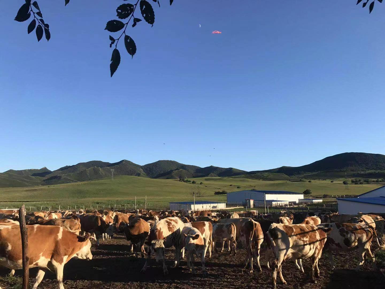 """就是""""牛""""!看扎鲁特草原牧民的新生活"""