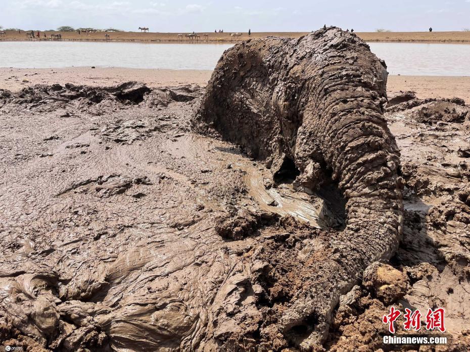 肯尼亚大象深陷泥沼生死一线 环保团队将其救出