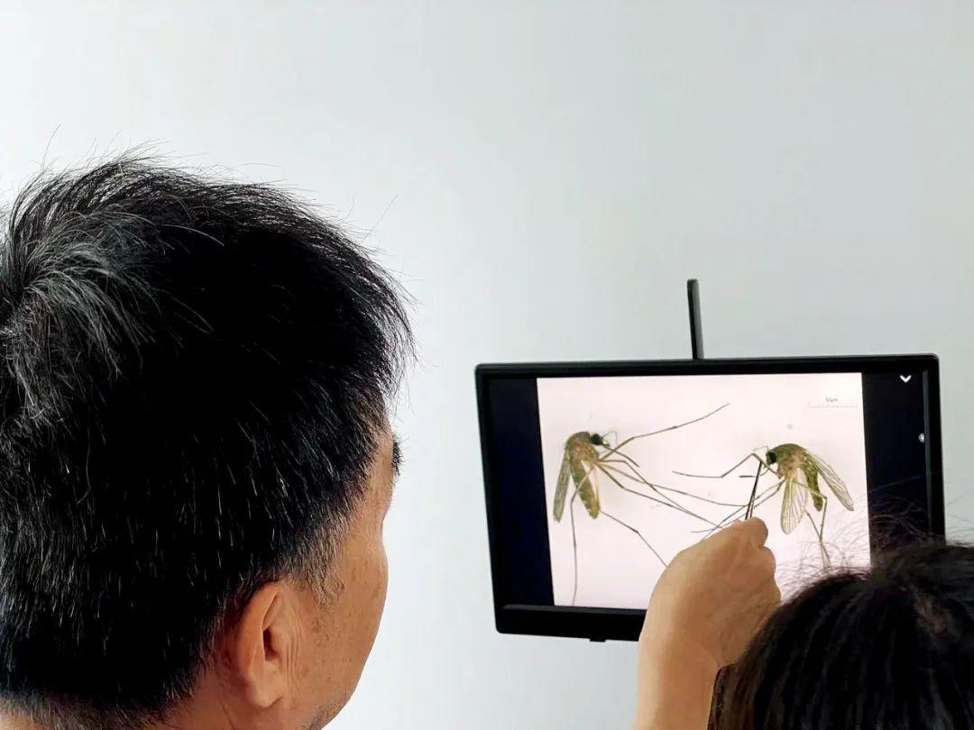 中国消除疟疾之后 如何应对卷土重来的风险?