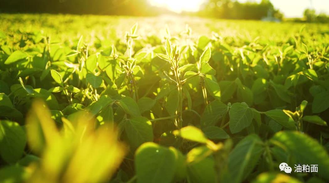 美国大豆主产区天气及生长状况