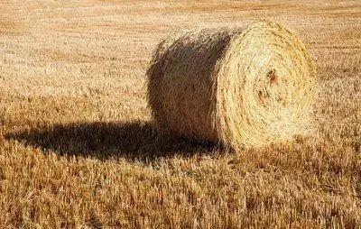 规划来了!未来这些农业产业将重点发展!