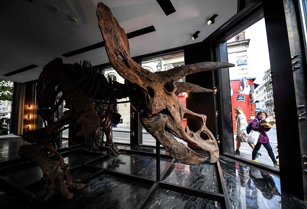 世界最大三角龙标本要拍卖 预估价120万至150万欧元