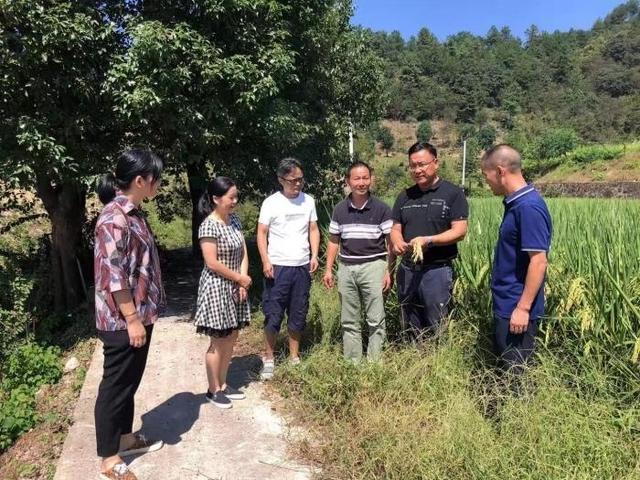 提高水稻栽培技术 保障粮食生产安全