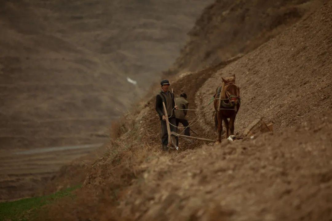 随着降水量增加,甘肃很多荒地已经开始种植中草药