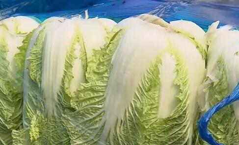 上海:蔬菜价格较高 紧急调运稳供保价