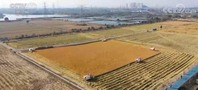 全国累计收购秋粮1.1亿吨同比增加500万吨