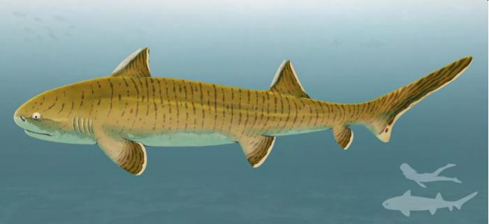 """罕见且几乎完整的化石揭示了""""侏罗纪时期鲨鱼中的巨人"""""""