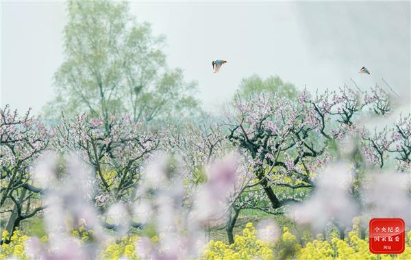 跟着镜头品诗词丨春之韵
