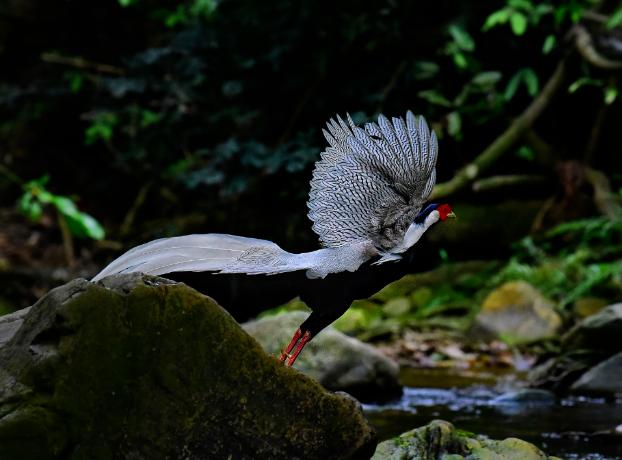 广东新版重点保护陆生野生动物名录向社会征求意见