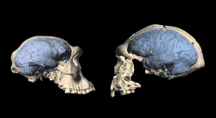 非洲最早智人种群拥有类似猿类的原始大脑  只有现代人类大脑的一半大小