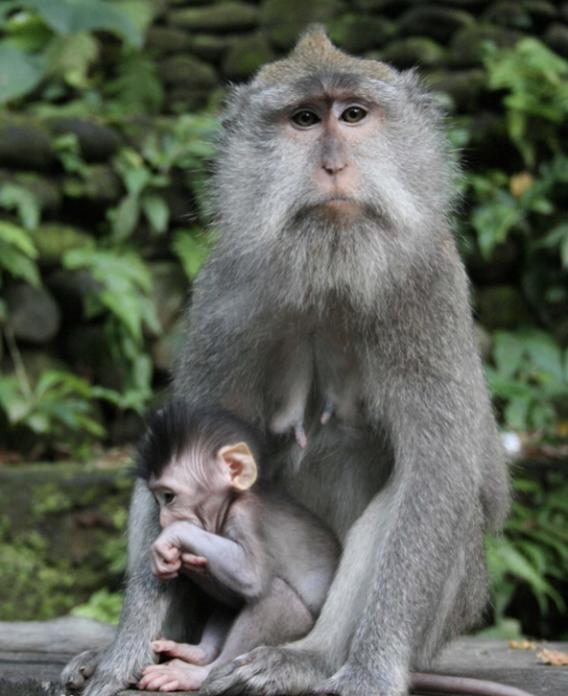 """人猴""""杂交""""胚胎首次存活20天!潘多拉魔盒被打开?"""