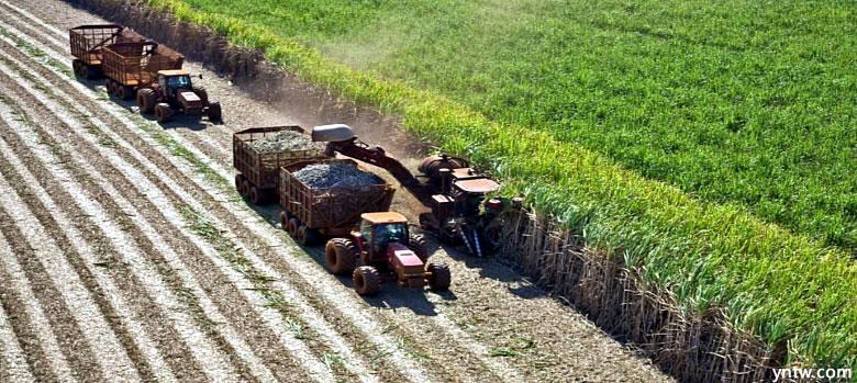 巴西一季度出口原糖593万吨 其中3月份出口198万吨
