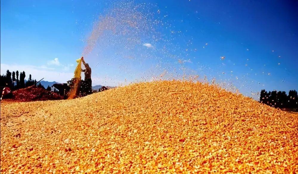 """4月""""开门黑"""",玉米价格大跳水!每吨下降110元,何时能回涨"""