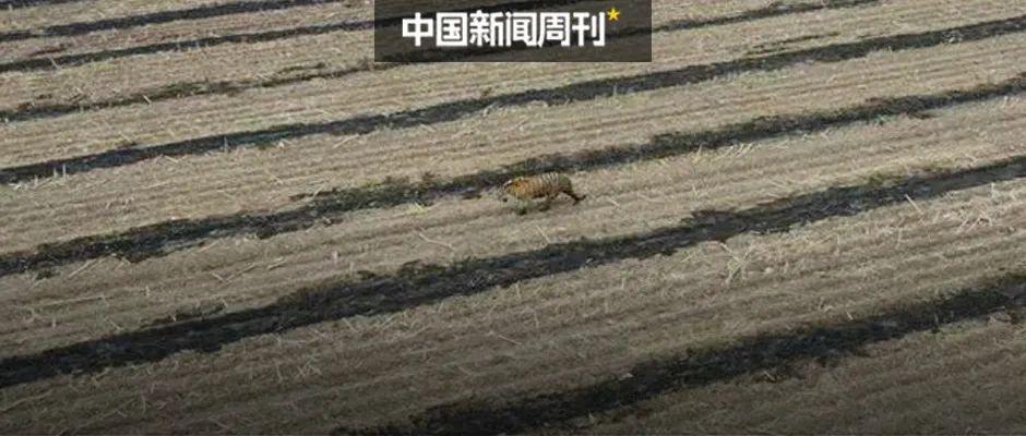 蜈蚣就这么瞬间被河豚吃了