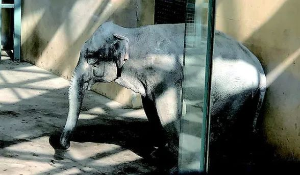 太原动物园大象。图/视频截图