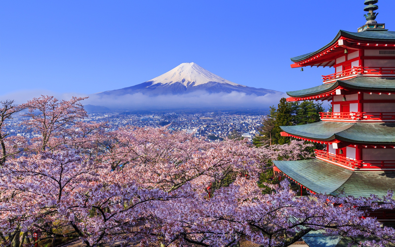 日本现千年来最早樱花季 美好景象背后掩藏怎样的危机?