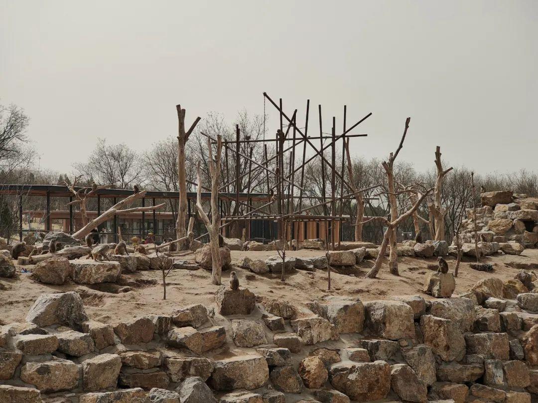 太原动物园一景。图/花蚀