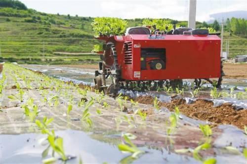 蔬菜移栽机正在作业。(来源:《陕西日报》)