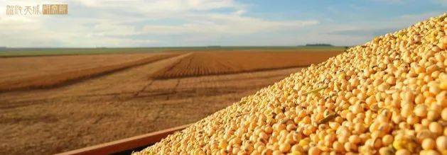 【农产品早评】美棉天气偏旱,恐有大幅减产