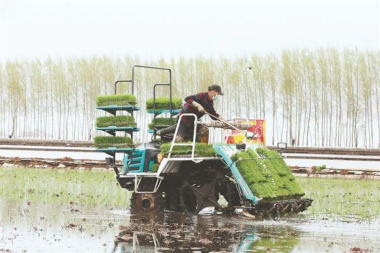 我省春耕生产全面掀起高潮,旱田作物已播9277.5万亩