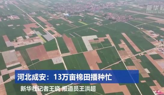 河北成安:13万亩棉田播种忙