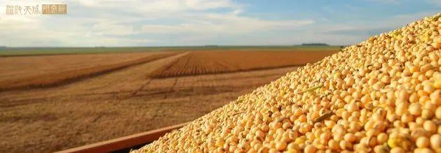 【农产品早评】政策打击囤积需求,玉米应声而跌