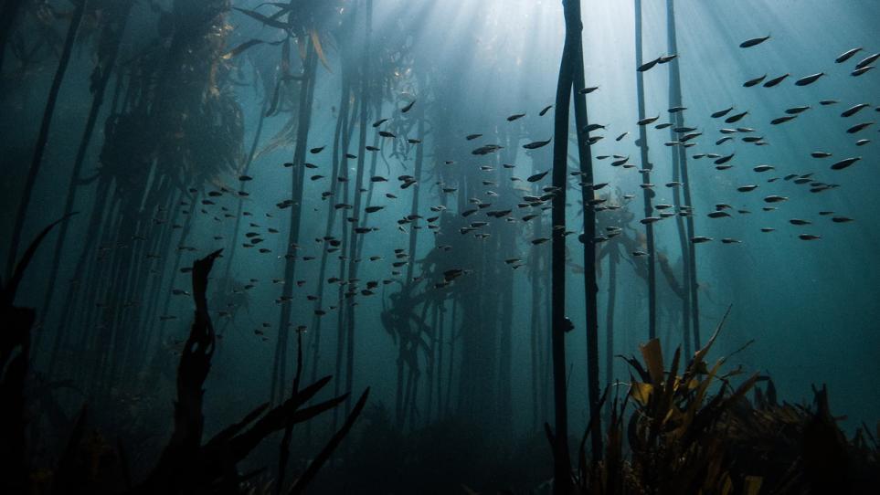 """非洲观察丨""""我的章鱼老师""""在海藻森林的家"""