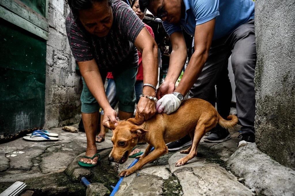 担心狂犬病蔓延,美国拦下百余国家的狗