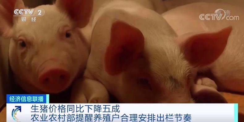 生猪价格同比降五成 农业农村部提醒合理安排出栏节奏