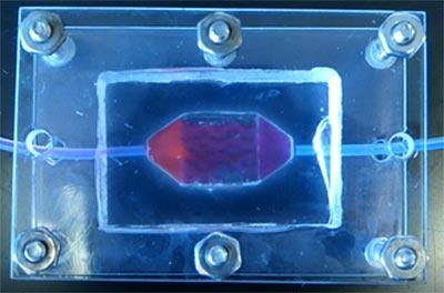 团队设计复杂人类血管组织 赢得NASA挑战赛最高奖项