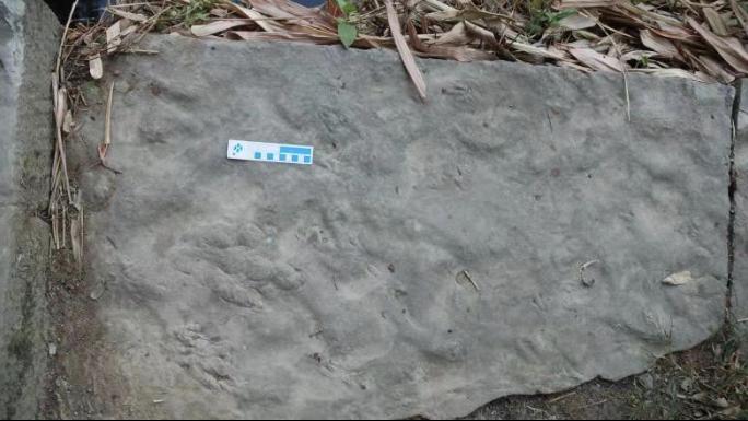 四川自贡发现中国最小恐龙足迹 活体约麻雀大小