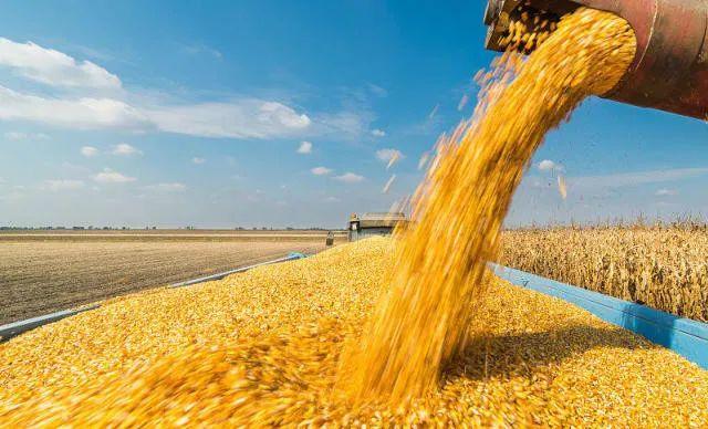 【专题报告】豆粕需求的核心驱动是畜禽养殖利润