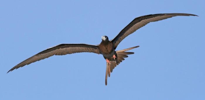 庞大的海鸟群为枯竭的鱼类种群制造了