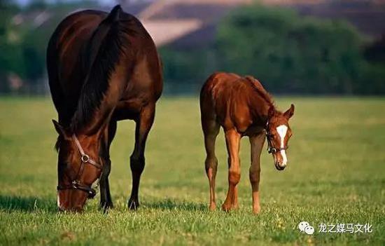 母马和小马