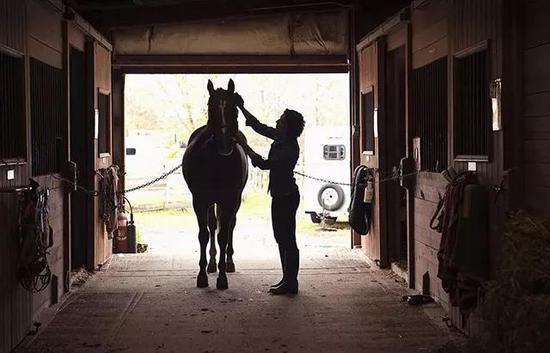 骑马前刷拭马匹