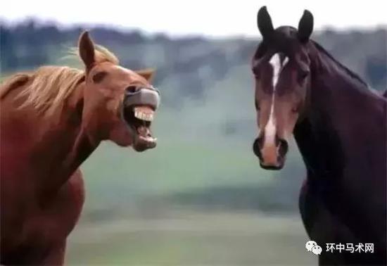 馬匹狀態鷄公頸  賽馬貼士
