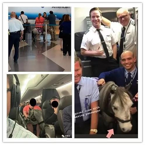 美国航空公司机组人员与幼马相符影