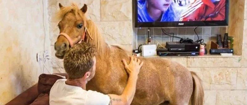 亚洲杯:为什么用矮马作导盲马?