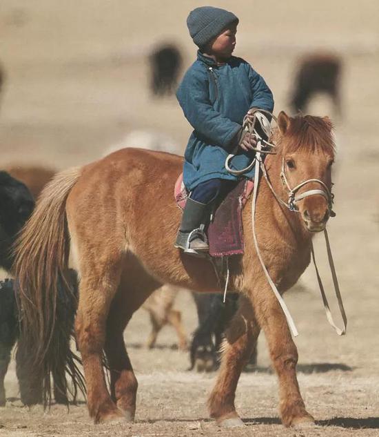 背着孩子的蒙古马