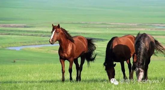 马是人类友人