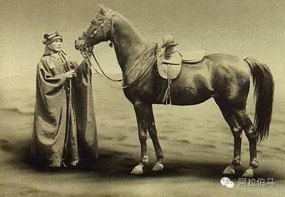 Lady Anne Blunt和她hg0088官网阿拉伯马