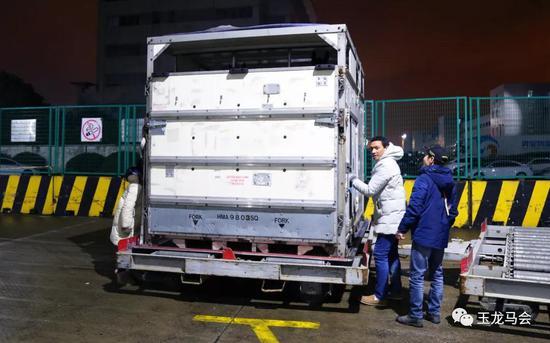 2020首批18匹进口纯血马,今晨落地上海